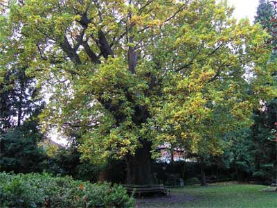 Minchenden Oak Garden