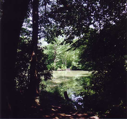 View of the pond groves