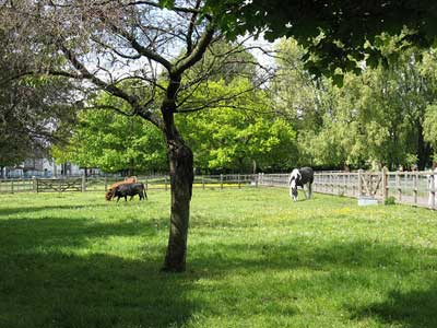Newham City Farm