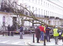 A fallen tree in Eaton Square damaged cars and blocked traffic