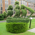 Whitgift School - Topiary