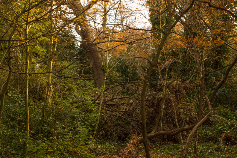 Dulwich Upper Wood Nature Reserve