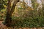 Dulwich Upper Wood Nature Reserve