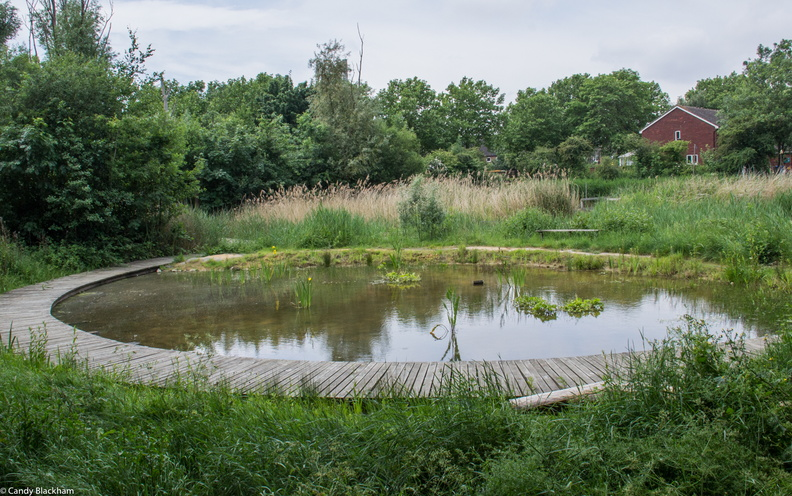 Lavender Pond and Nature Park