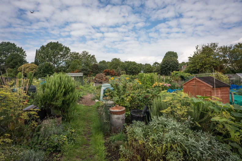 Fulham Palace Meadows Allotments