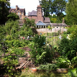 Branch Hill Allotments