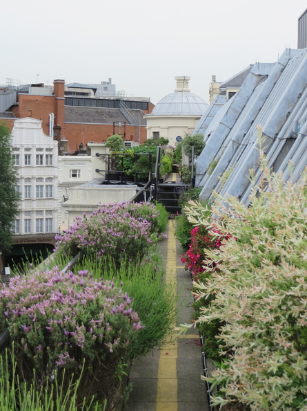 The Coutts Skyline Garden