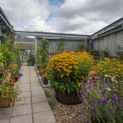 Eversheds Sutherland Vegetable Garden