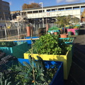Community Garden Cluster at Kensington Olympia