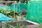 Cranbrook Community Food Garden