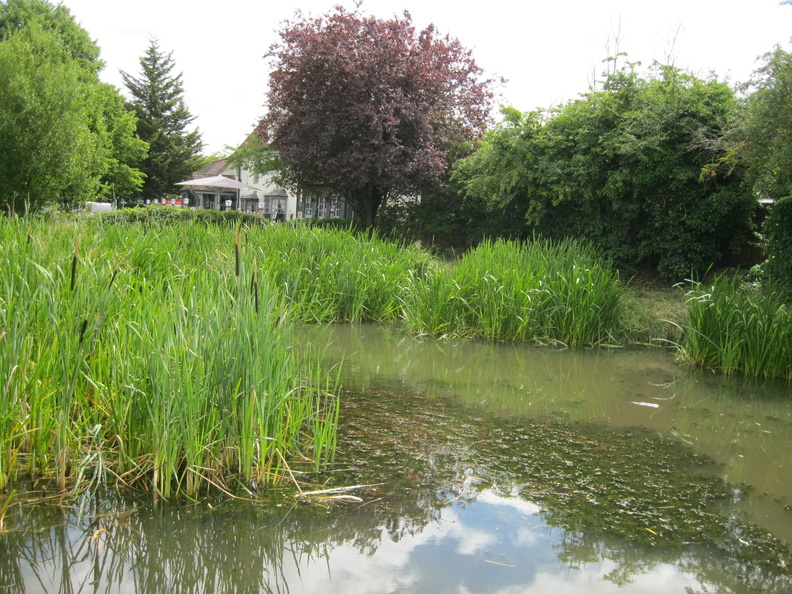 Plough Pond